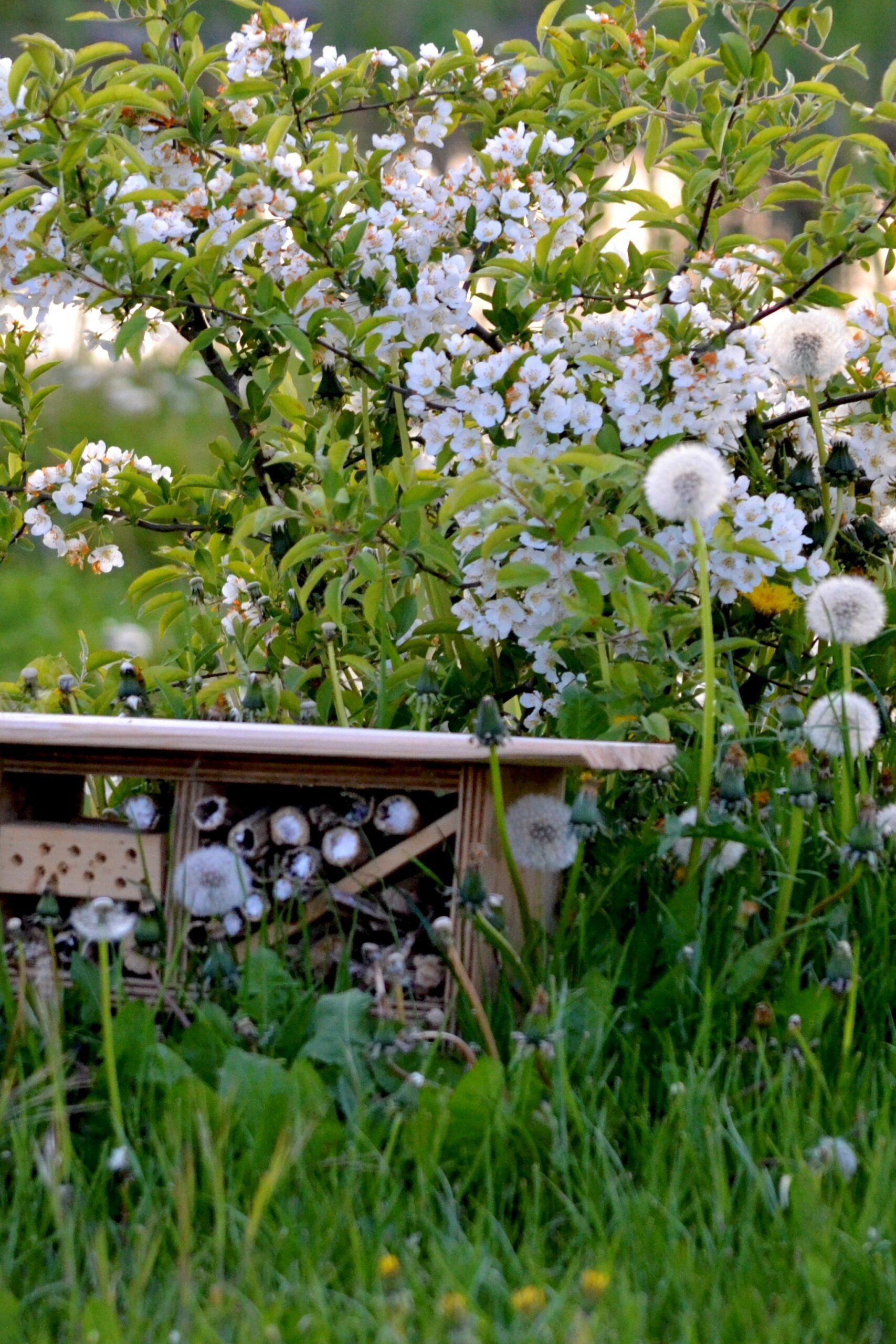 Insekthotel og blomster